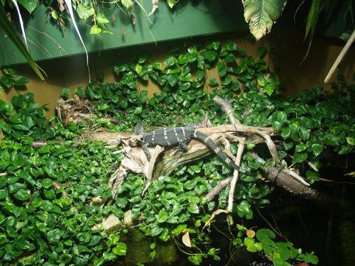 monitor-lizard-terrarium