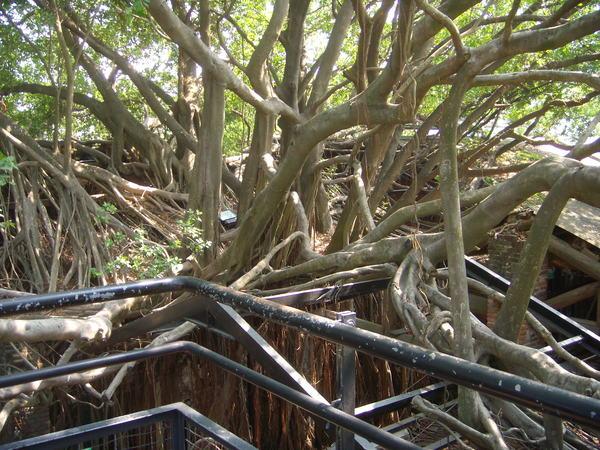 安平樹屋-從屋頂