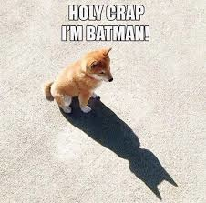 「shiba i'm batman」的圖片搜尋結果
