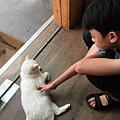 小孩愛玩毛小孩 貓毛 狗毛 過敏 JAIR 潔淨 空氣清淨機1