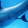 小海豚誕生 1
