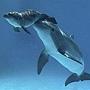 小海豚誕生 5
