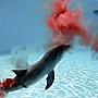 小海豚誕生 3