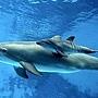 小海豚誕生 4