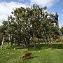 apple-tree-250-varieties-2