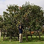 apple-tree-250-varieties-1
