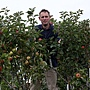 apple-tree-250-varieties-4