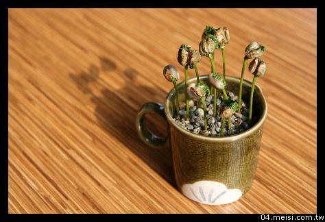 很萌的家飾品-種子盆栽