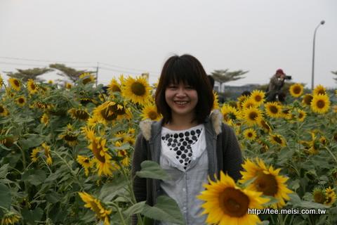2009年橋頭花海