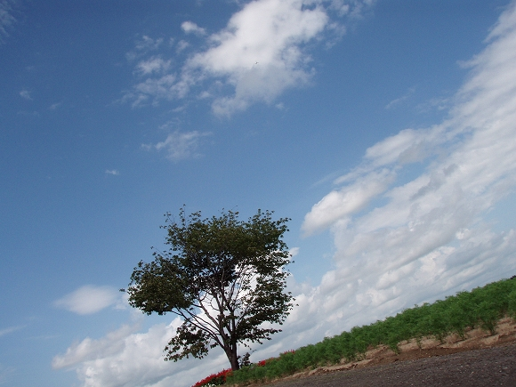 傳說Mild seven 廣告樹