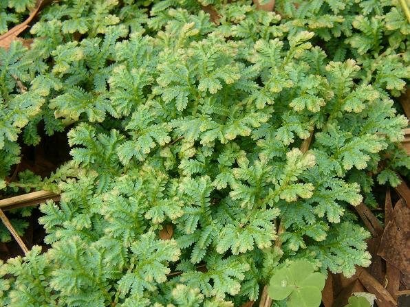 這又是什麼植物?
