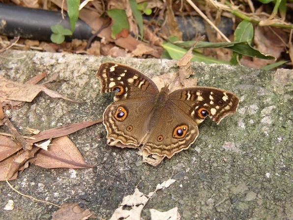這蝴蝶又叫啥?