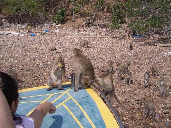 猴子島上猴子上船,還會掏人口袋