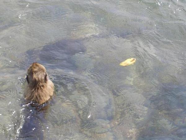 潛水下去撈香蕉