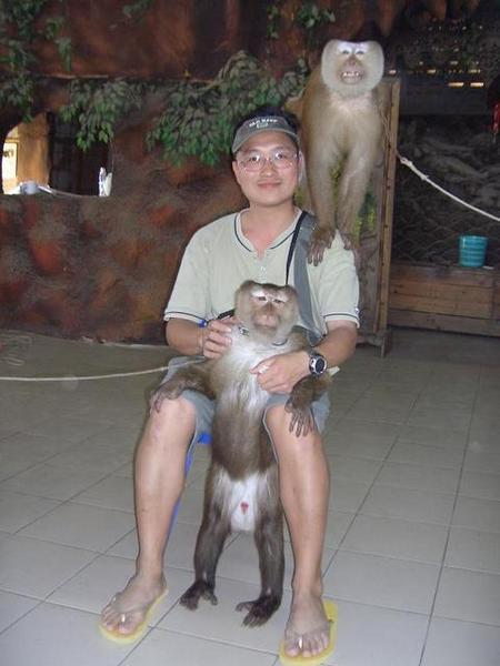 前面是劉德華,後面是郭富城(猴子學校)