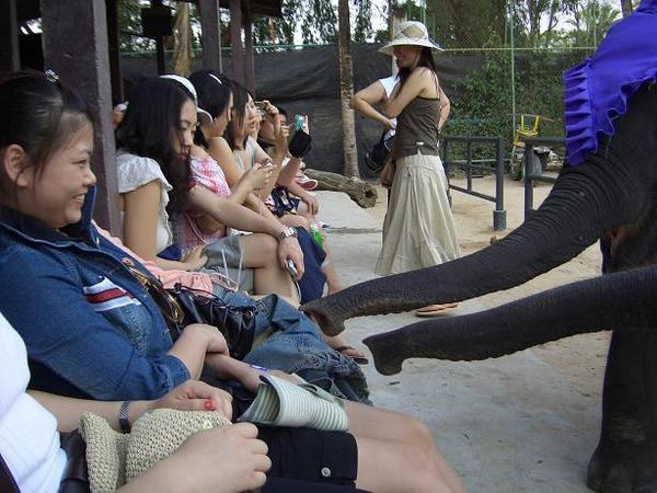 大象搶香蕉