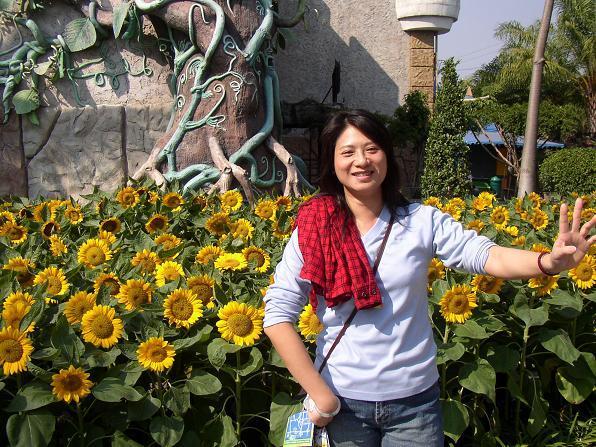 東方迪士尼-夢幻世界外的向日葵
