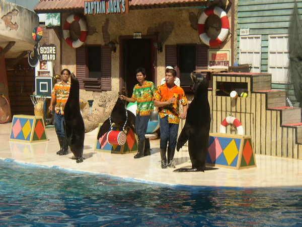 賽幅瑞世界海獅表演