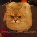 貓版方塊酥