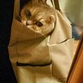 袋子咩01.jpg