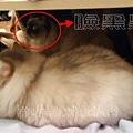 兩貓同窩 1.jpg