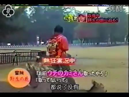[14]_020109_真夜中の嵐-松鹿と対決(松)[16-29-13].JPG