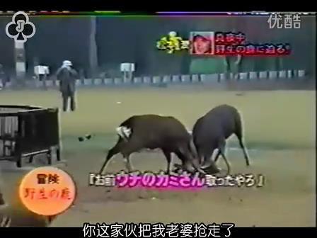 [14]_020109_真夜中の嵐-松鹿と対決(松)[16-29-11].JPG