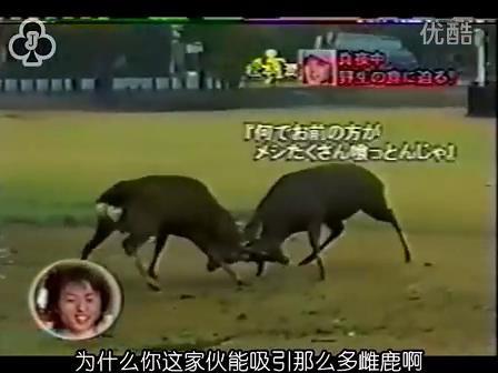 [14]_020109_真夜中の嵐-松鹿と対決(松)[16-29-21].JPG