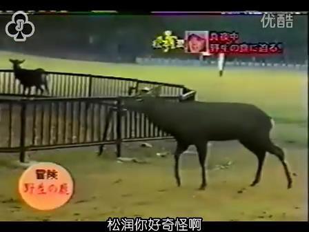 [14]_020109_真夜中の嵐-松鹿と対決(松)[16-29-34].JPG