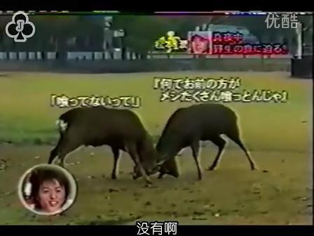 [14]_020109_真夜中の嵐-松鹿と対決(松)[16-29-22].JPG