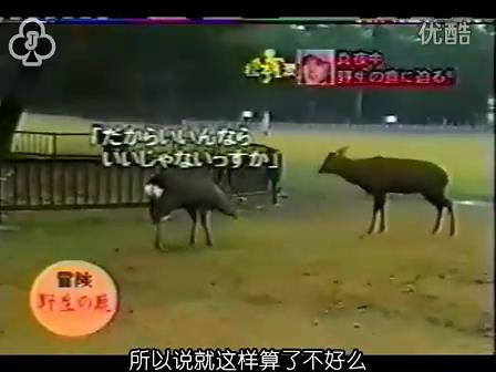 [14]_020109_真夜中の嵐-松鹿と対決(松)[16-29-28].JPG