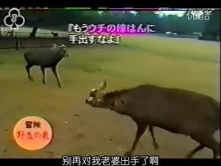 [14]_020109_真夜中の嵐-松鹿と対決(松)[16-29-43].JPG