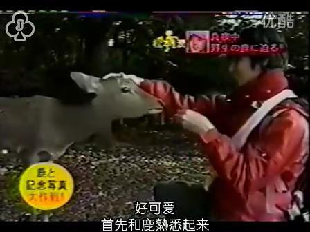 [14]_020109_真夜中の嵐-松鹿と対決(松)[16-29-55].JPG