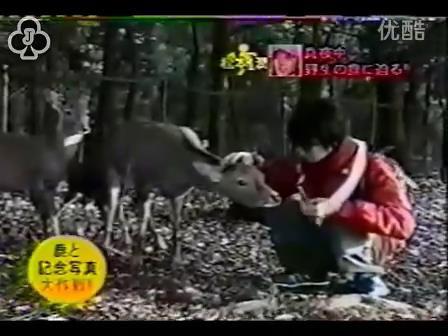 [14]_020109_真夜中の嵐-松鹿と対決(松)[16-30-05].JPG