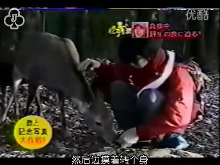 [14]_020109_真夜中の嵐-松鹿と対決(松)[16-30-06].JPG