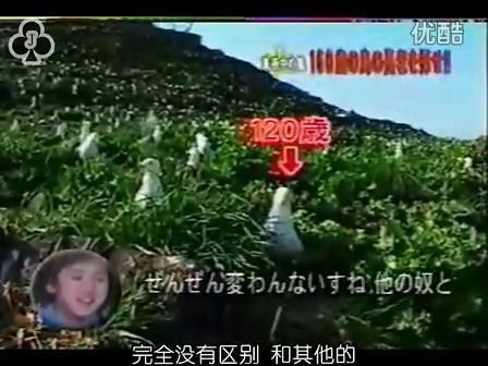 [32]_020515_真夜中の嵐-160歳の鳥を探せ(松)[17-32-08].JPG