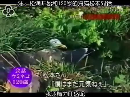 [32]_020515_真夜中の嵐-160歳の鳥を探せ(松)[17-34-24].JPG