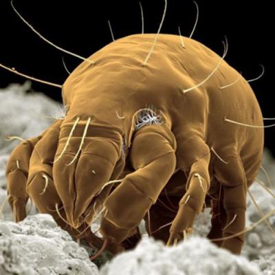 20150519-一招殺光床上的蟎蟲-圖片9