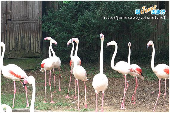 六福村主題遊樂園_動物園003