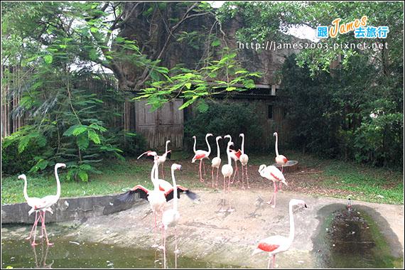 六福村主題遊樂園_動物園002