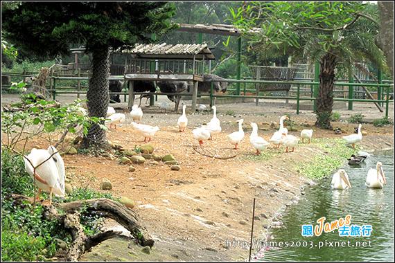 六福村主題遊樂園_動物園011