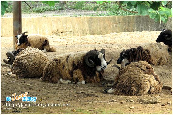 六福村主題遊樂園_動物園016
