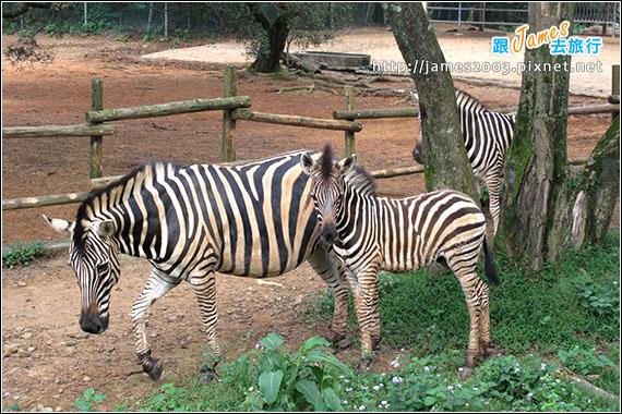 六福村主題遊樂園_動物園022