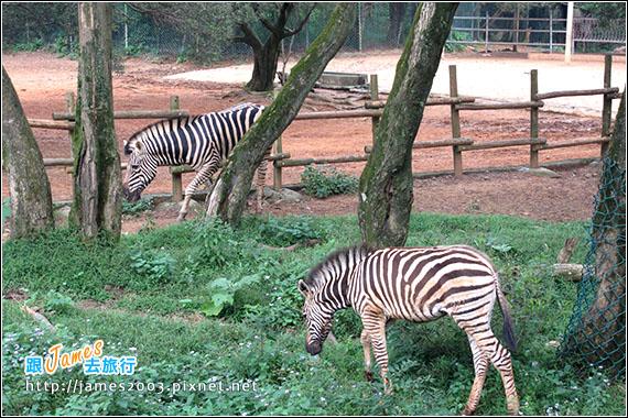 六福村主題遊樂園_動物園020