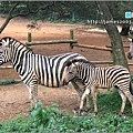 六福村主題遊樂園_動物園021