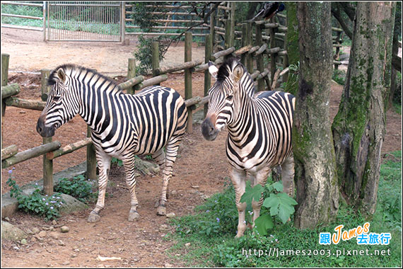 六福村主題遊樂園_動物園024