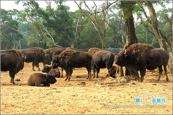 六福村主題遊樂園_動物園027
