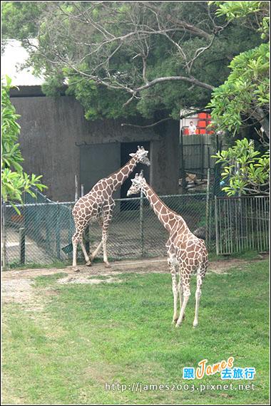 六福村主題遊樂園_動物園029