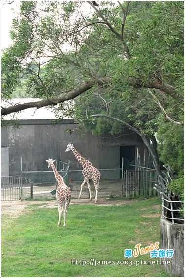 六福村主題遊樂園_動物園028