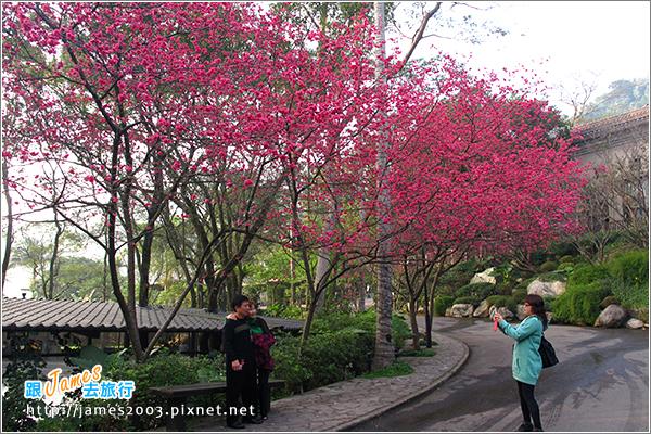 [台北] 大板根森林溫泉渡假村01